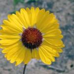 Benchflower