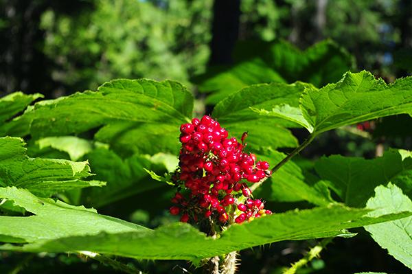 morrisseyberries