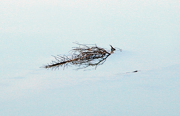 waterstick