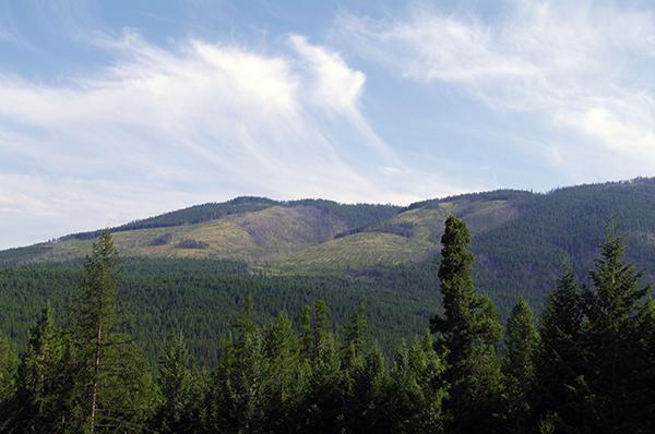 timbersupply
