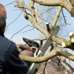 tree pruning BCH